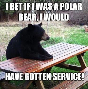 bear-racism