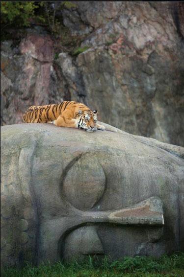 TigeronBuddha