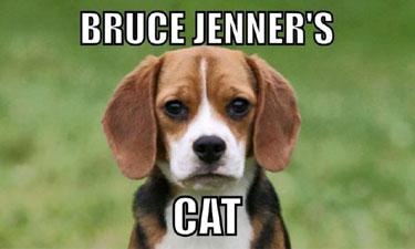 BruceJennersCat